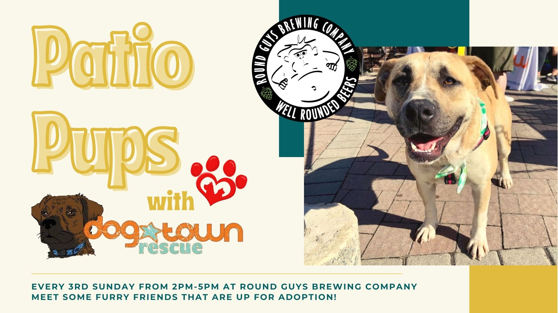 Patio Pups every 2nd Sunday at Round Guys Brewing Company in Lansdale, PA.